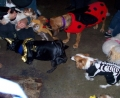 Halloween pour les chiens !!!